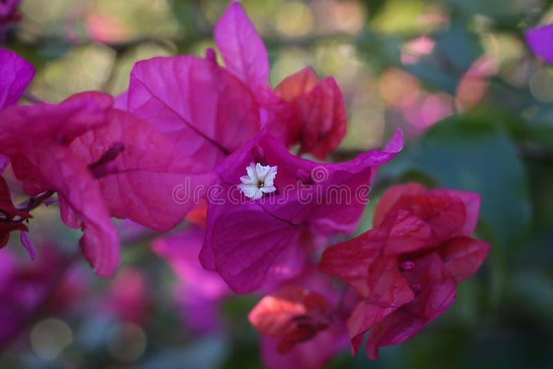Uiterst kleine witte bloem royalty-vrije stock foto's