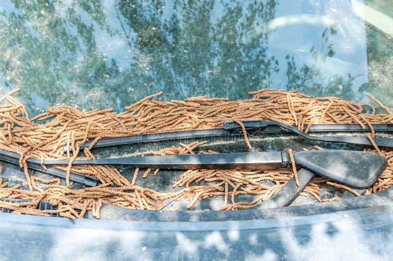 Uiterst vuile die auto onder de boom wordt geparkeerd met stof en droge bladeren wordt behandeld stock afbeelding