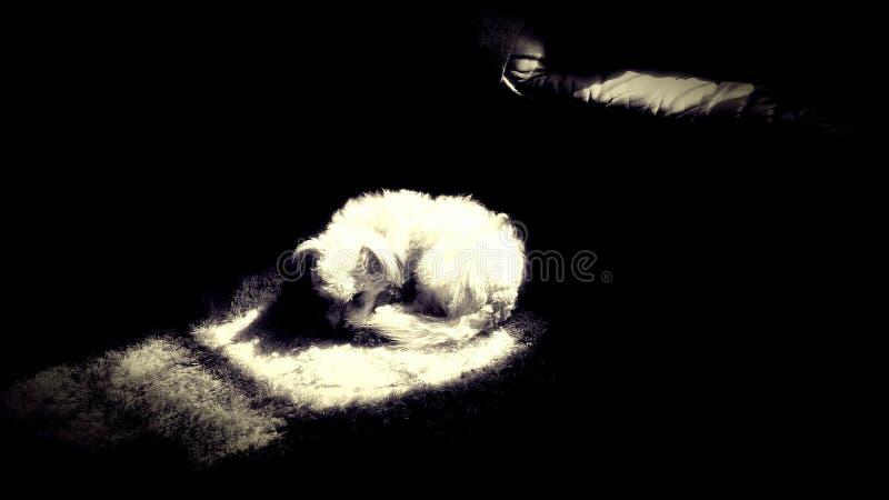 Uitgegeven schaduwen, van een kleine hond in de zonneschijn, stock afbeelding