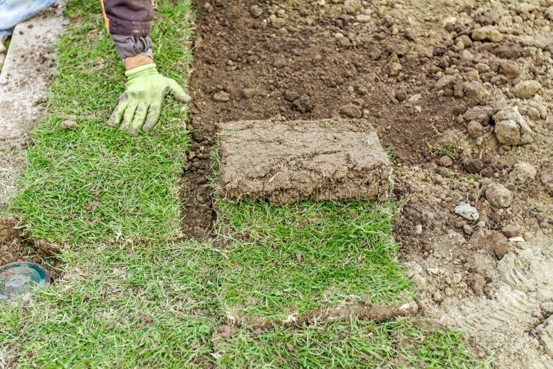 Uitrollend gras, die grasbroodjes toepassen voor een nieuw gazon stock afbeeldingen