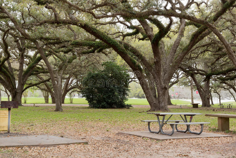 Uitspreidende bomen stock fotografie