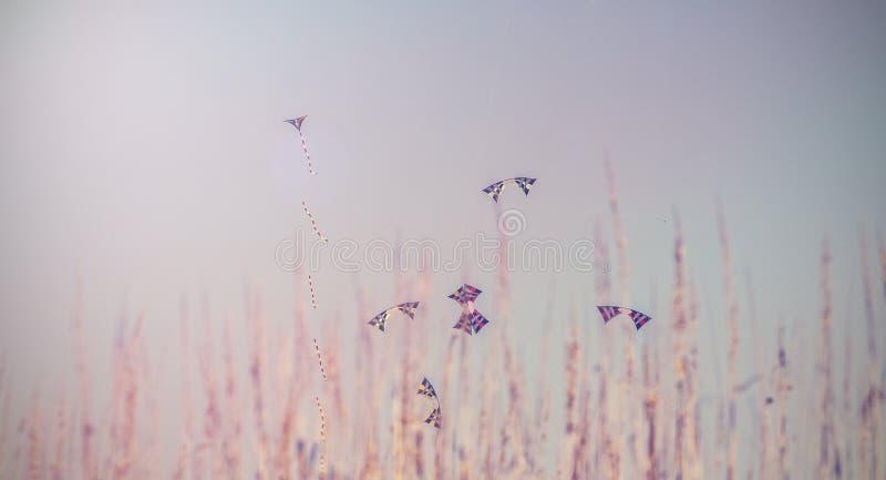 Uitstekend beeld van Kleurrijke Vliegers die in Blauwe Hemel achter gras vliegen stock afbeeldingen