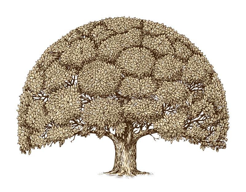 Uitstekend boomgebladerte Hand-drawn schets oude eik nave vector illustratie