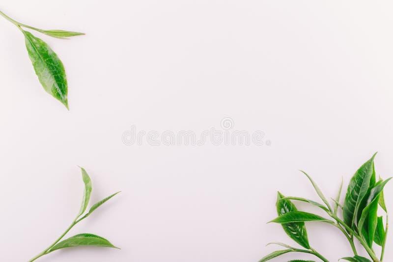 uitstekend Groen die theeblad op witte achtergrond wordt ge?soleerd royalty-vrije stock fotografie