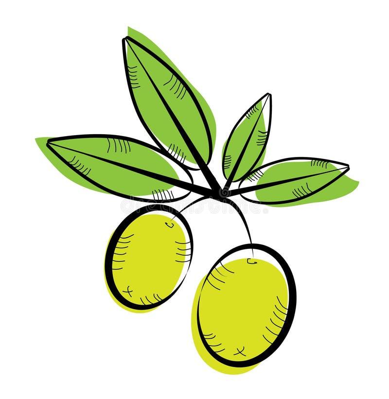 Uitstekend, groen takje met olijven en stock illustratie
