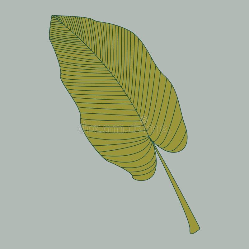 Uitstekend hand getrokken patroon met banaanblad getrokken overzicht voor decoratief ontwerp Hand getrokken de banaanreeks van de stock illustratie