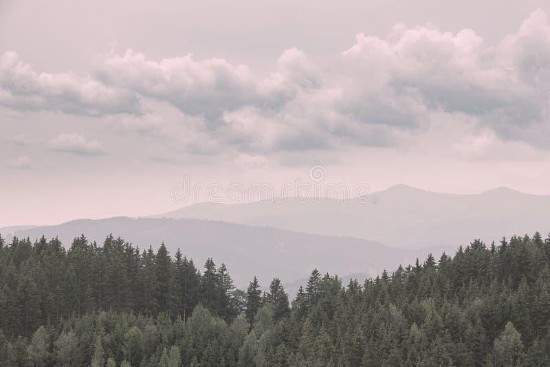 Uitstekend kijk van sparren, pijnbomen, lariksenbos met mist en lage wolken Nostalgisch kijk royalty-vrije stock afbeeldingen