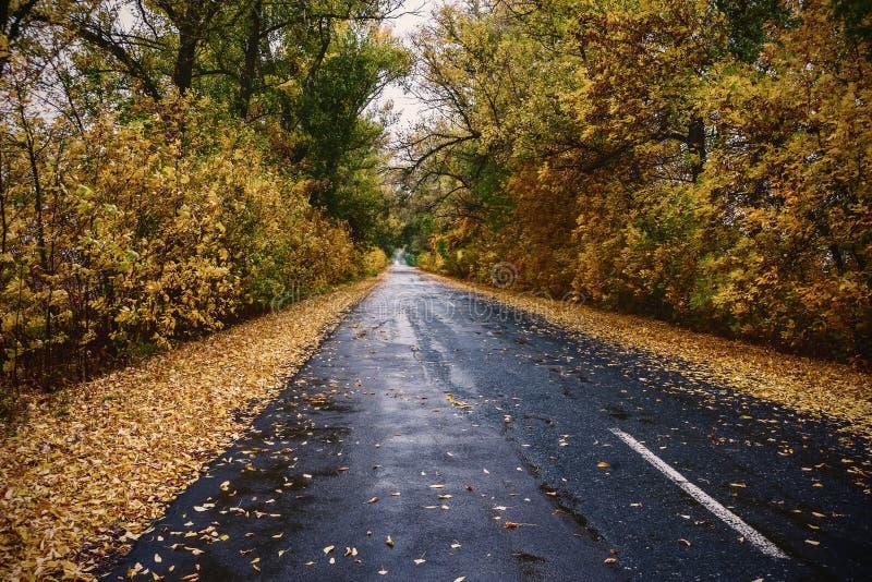Uitstekend landschap met de herfstweg royalty-vrije stock foto