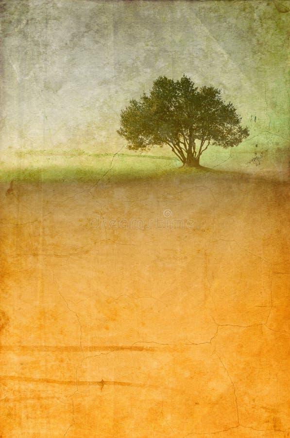 Uitstekend landschap met enige olijfboom Exemplaarruimte voor tekst royalty-vrije stock foto