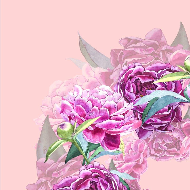 Uitstekend pioenmalplaatje De illustratie van de waterverf Ontwerpelementen voor kaarten, uitnodigingen en textiel Geïsoleerd op  royalty-vrije illustratie