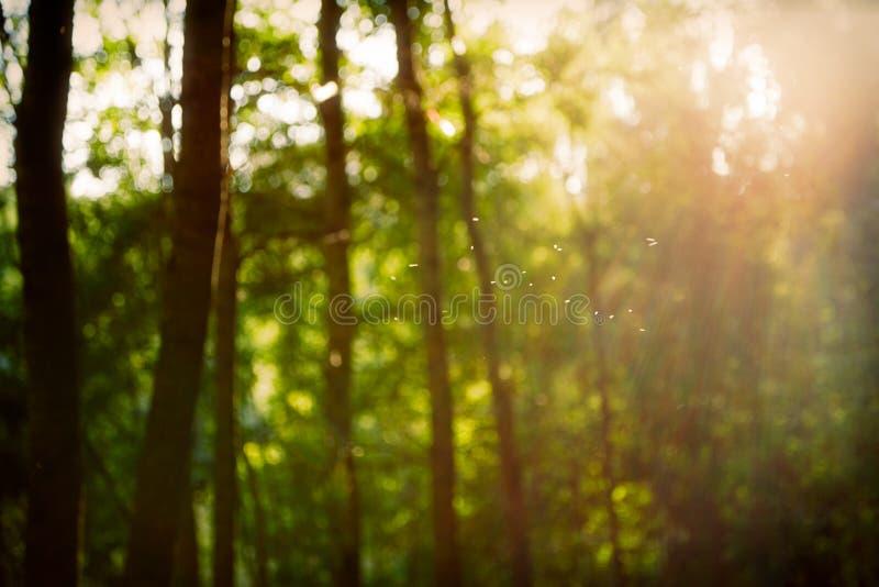 Uitstekend retro vaag boslandschap met lekken en bokeh royalty-vrije stock foto's