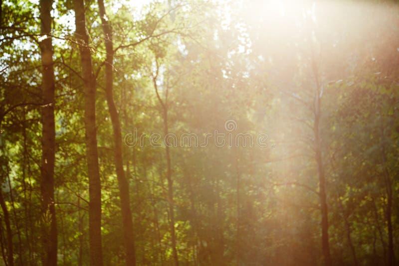 Uitstekend retro vaag boslandschap met lekken en bokeh royalty-vrije stock foto