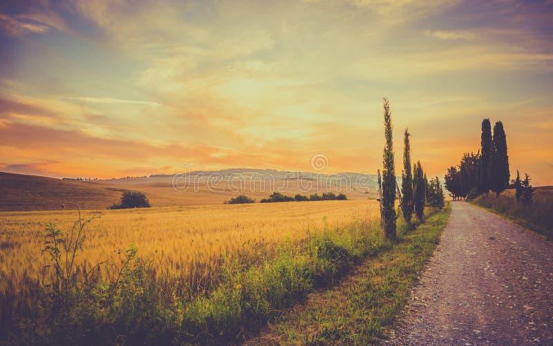 Uitstekend Toscaans landschap royalty-vrije stock fotografie