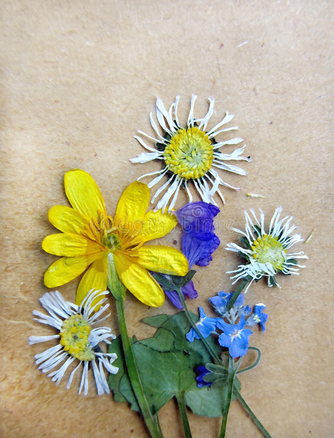 Uitstekende achtergrond met droge herbariuminstallaties stock foto's
