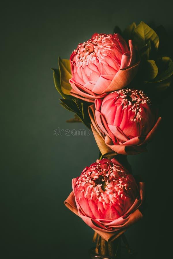 Uitstekende beeldstijl op roze die waterlelie of lotusbloembloem vouwen stock afbeelding
