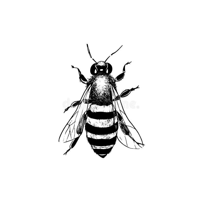 Uitstekende bijenillustratie stock illustratie
