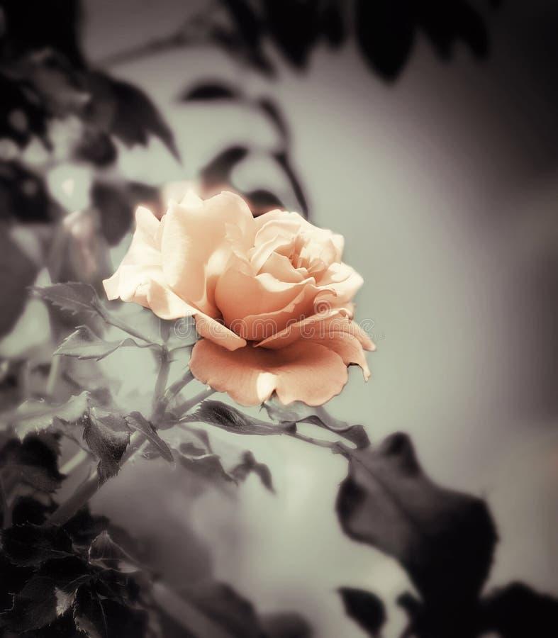 Uitstekende bloem royalty-vrije stock foto