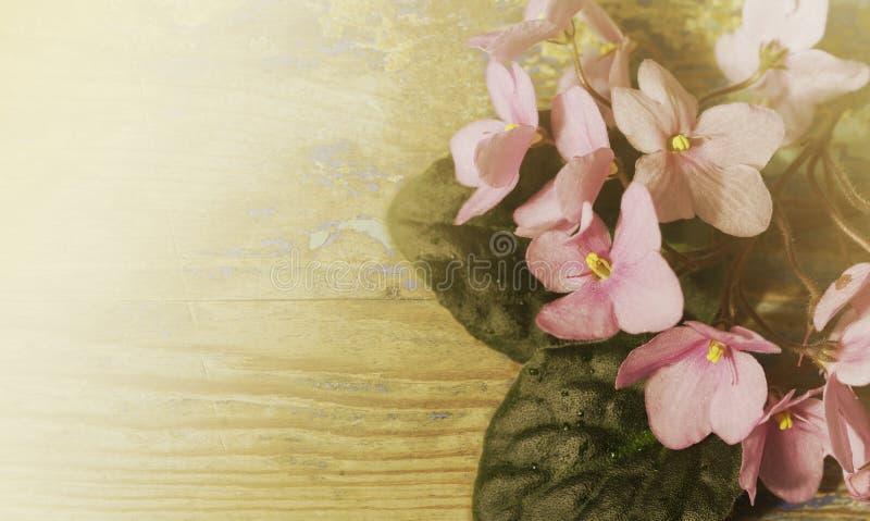 Uitstekende bloemenachtergrond Boeket van roze violette bloemen op een oude houten raad Nevelige zonnige ochtend stock afbeeldingen