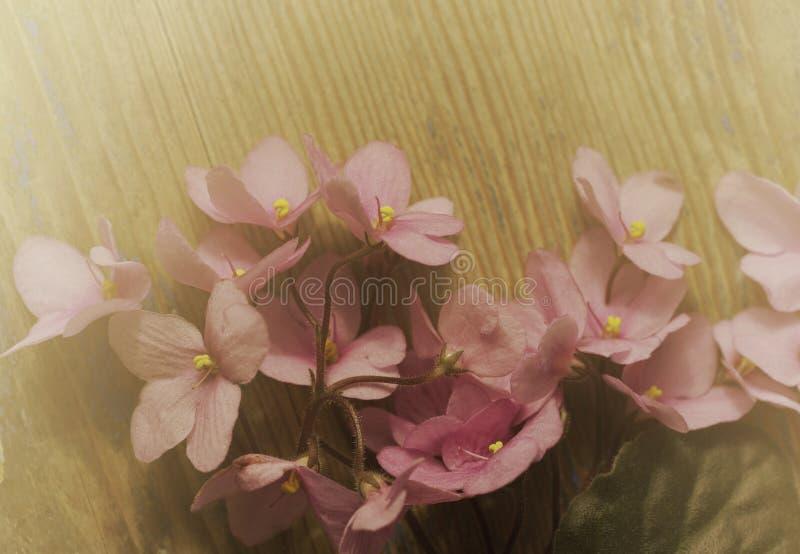 Uitstekende bloemenachtergrond Boeket van roze violette bloemen op een oude houten raad Nevelige zonnige ochtend royalty-vrije stock fotografie