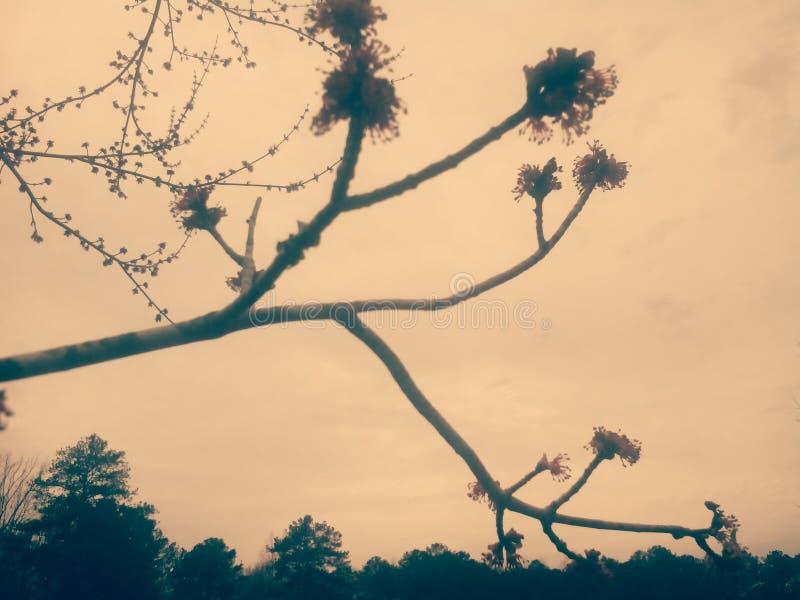 Uitstekende boomtak stock afbeelding