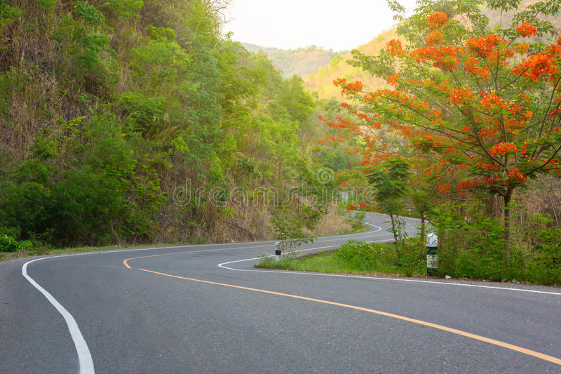 Uitstekende bosweg stock foto's