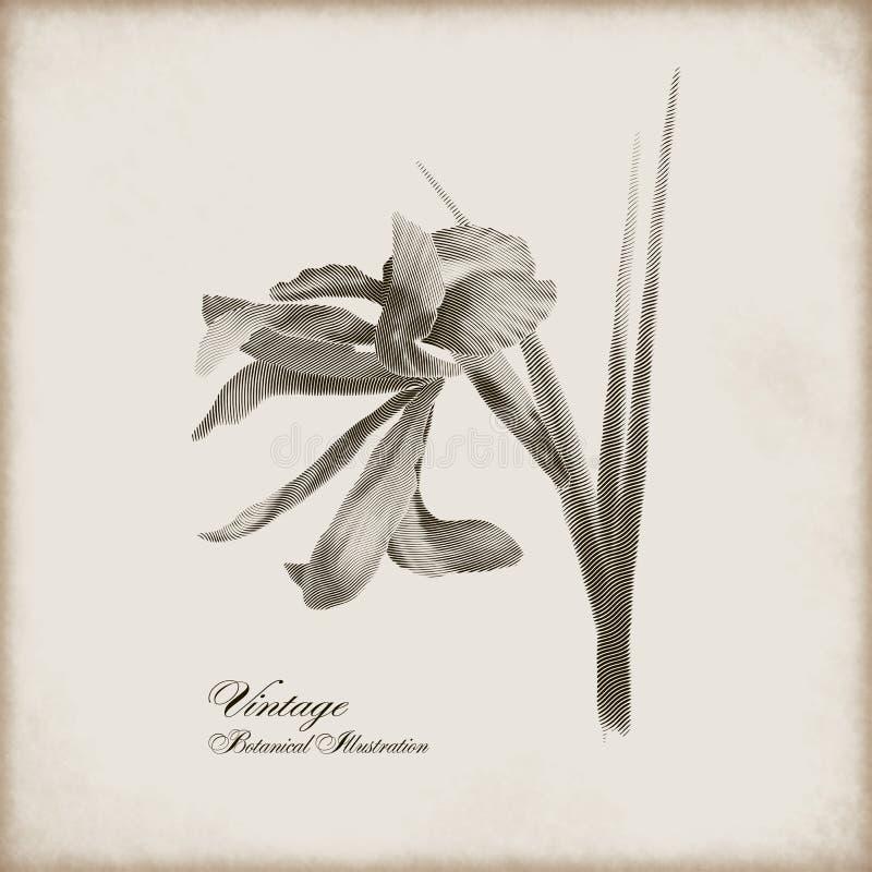 Uitstekende botanische illustratie vector illustratie