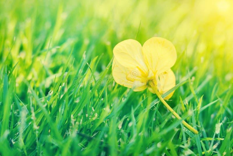 Uitstekende de bloemachtergrond van de landschapsaard royalty-vrije stock foto's