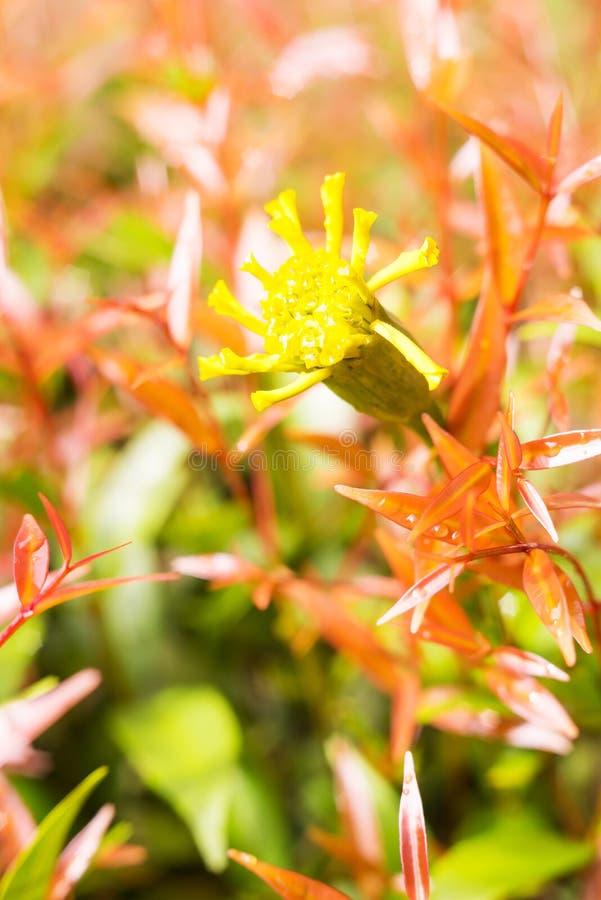 Uitstekende de bloemachtergrond van de landschapsaard stock afbeelding