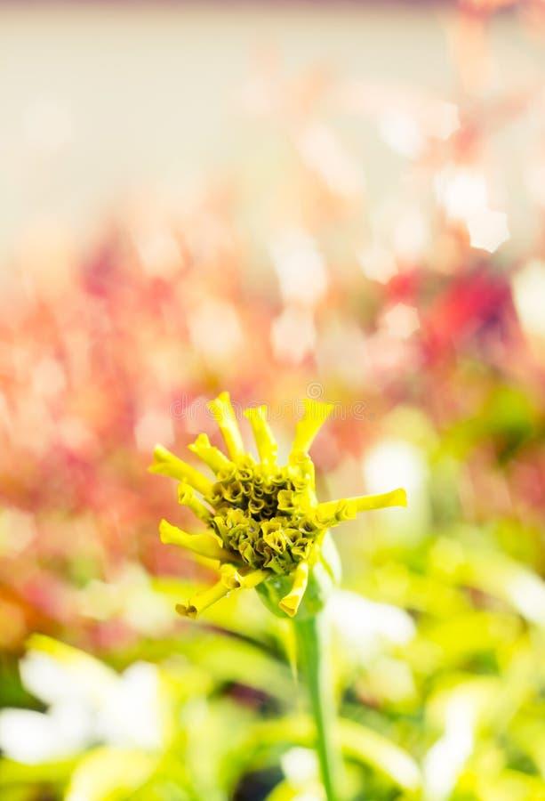 Uitstekende de bloemachtergrond van de landschapsaard royalty-vrije stock afbeeldingen