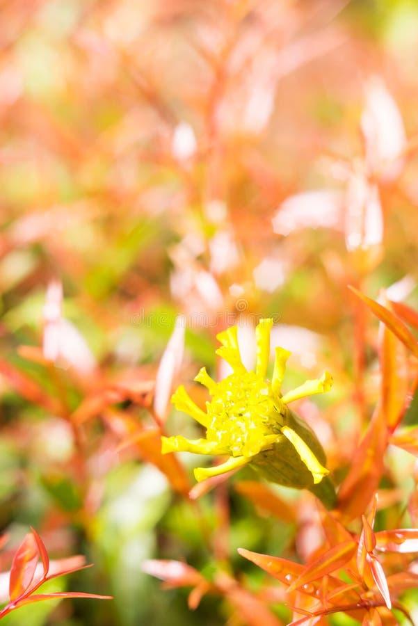 Uitstekende de bloemachtergrond van de landschapsaard stock foto's