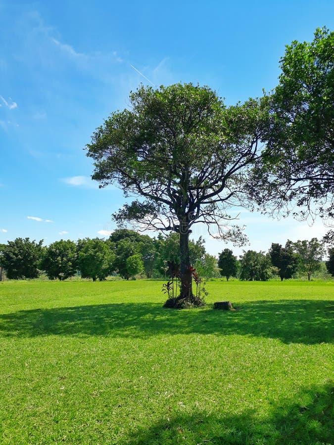 Uitstekende die schaduw door een boom op een mooi groen gebied wordt verstrekt royalty-vrije stock afbeelding