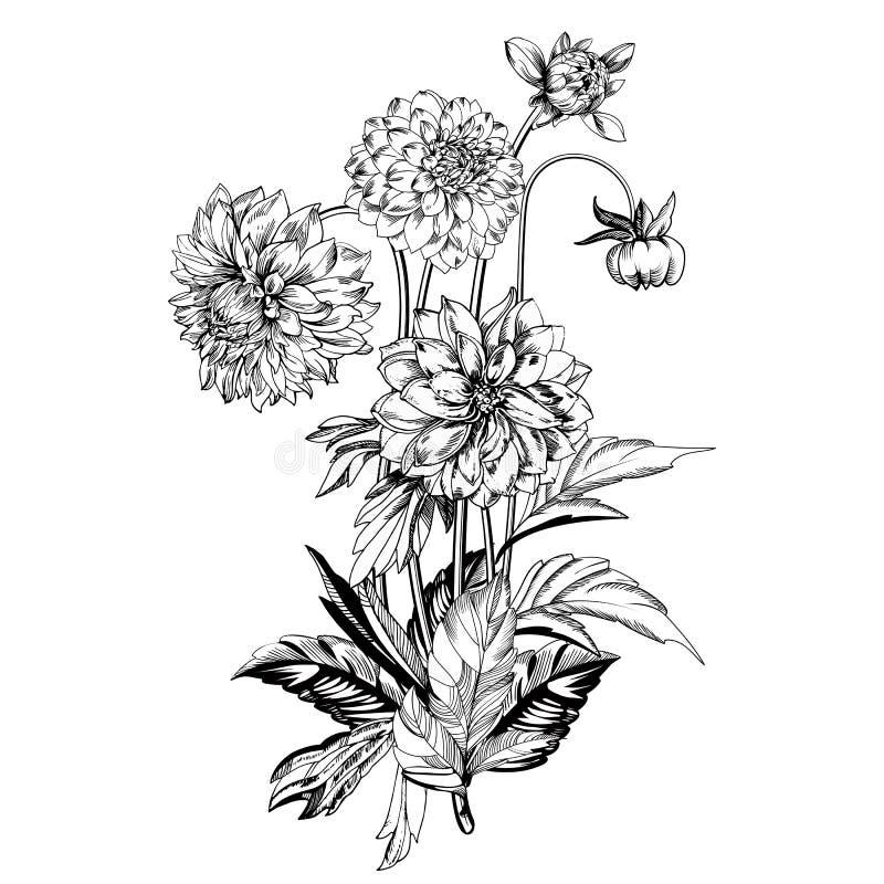 Uitstekende elegante bloemen Zwart-witte vectorillustratie Dahlia'sbloemen plantkunde royalty-vrije illustratie