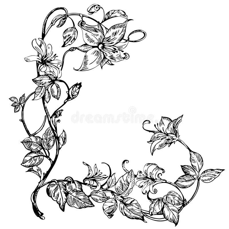 Uitstekende elegante bloemen Zwart-witte vectorillustratie Honeysuckle Flower plantkunde royalty-vrije illustratie