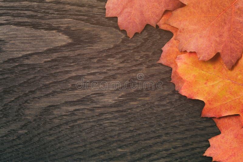 Uitstekende gestemde de herfst eiken bladeren voor achtergrond royalty-vrije stock foto's