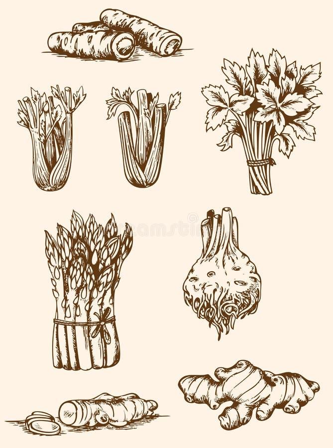 Uitstekende groenten vector illustratie