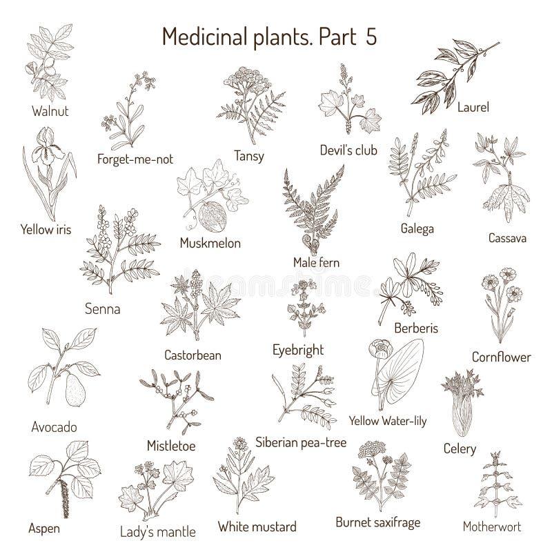 Uitstekende inzameling van hand getrokken medische kruiden en installaties vector illustratie