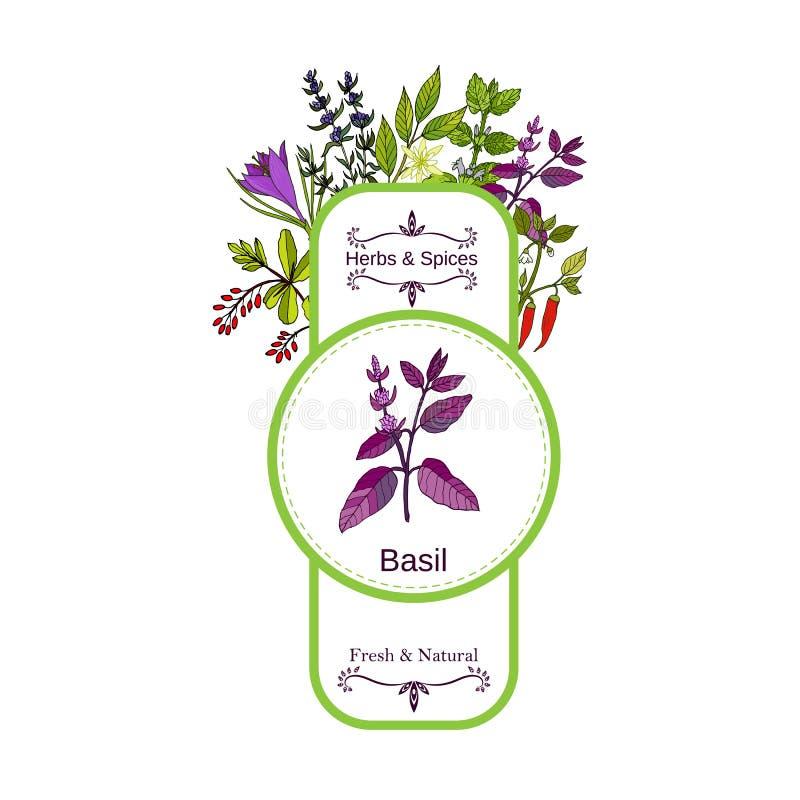 Uitstekende kruiden en kruidenetiketinzameling Basilicum vector illustratie