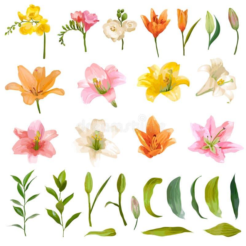 Uitstekende Lelie en Rose Flowers Set - Waterverfstijl vector illustratie