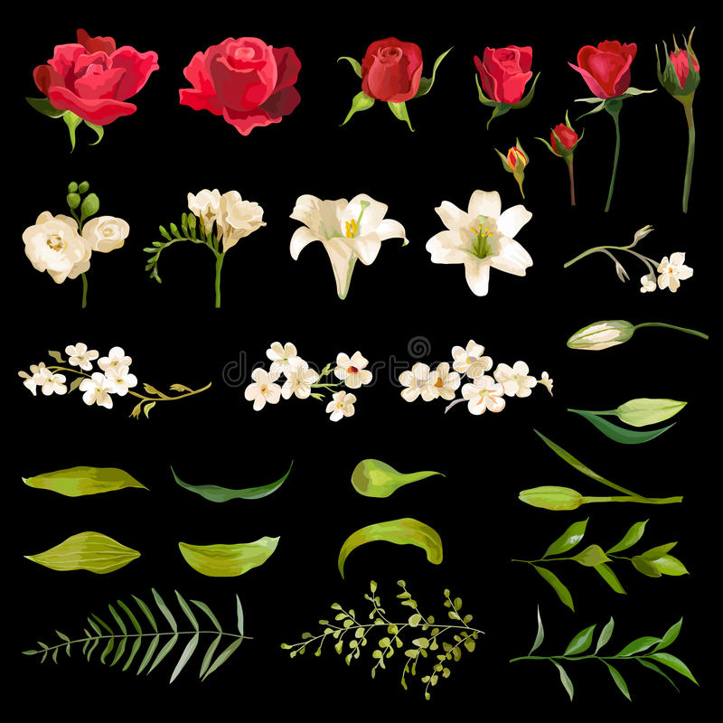 Uitstekende Lelie en Rose Flowers Set in Waterverfstijl royalty-vrije illustratie