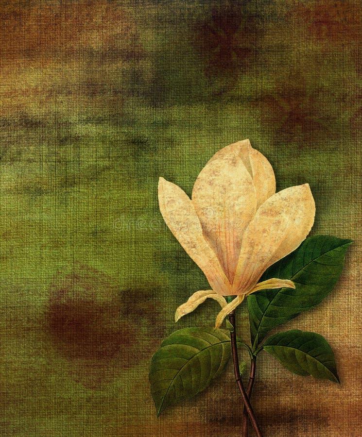 Uitstekende magnolia stock illustratie