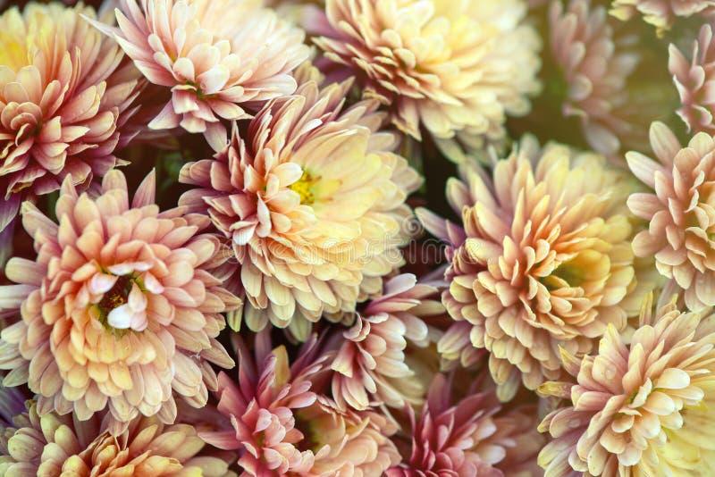 Uitstekende oude bloemachtergronden - uitstekende effect stijlbeelden royalty-vrije stock afbeeldingen