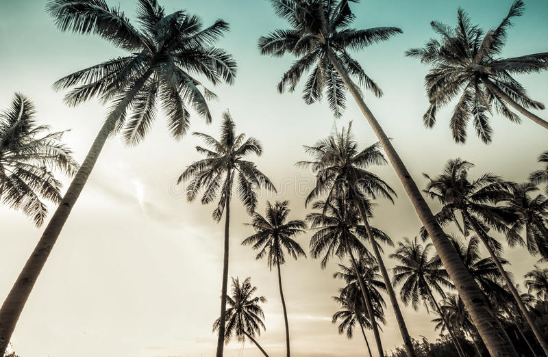 Uitstekende palmachtergrond stock foto