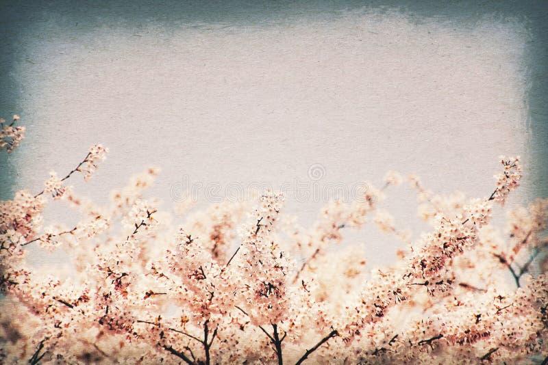 Uitstekende prentbriefkaar Kersenbloesems tegen blauwe hemel - selectieve nadruk Oude document textuurstijl stock afbeelding