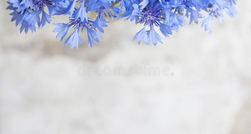 Uitstekende prentbriefkaar met blauwe bloem royalty-vrije stock foto