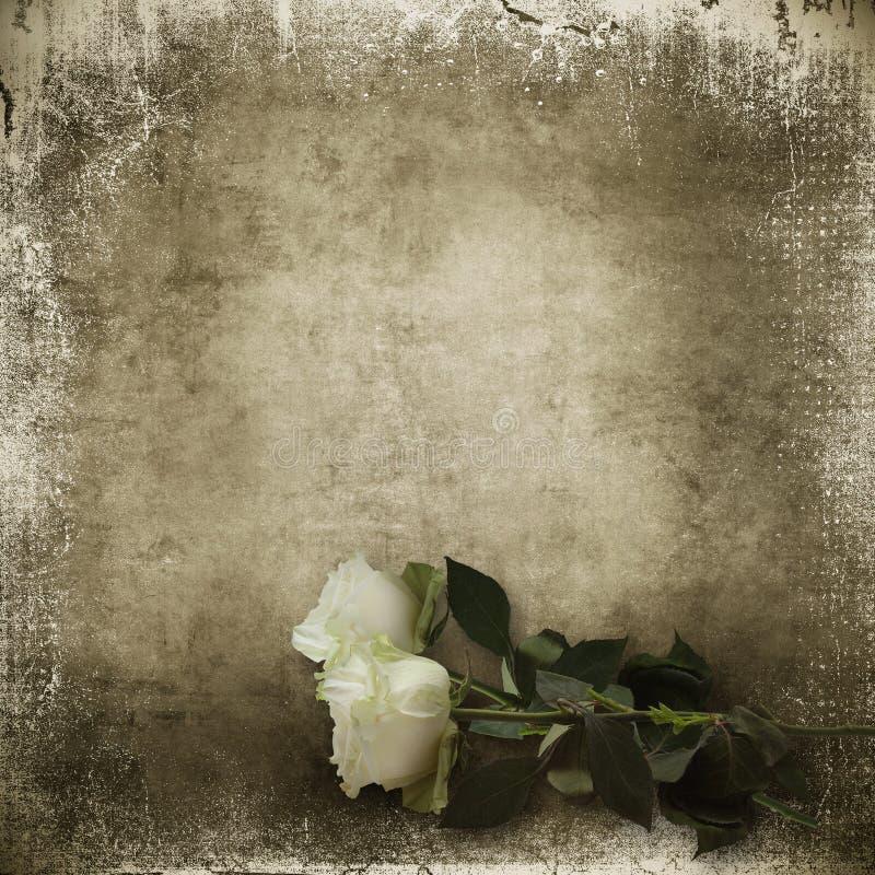 Uitstekende sjofele achtergrond met witte rozen royalty-vrije illustratie
