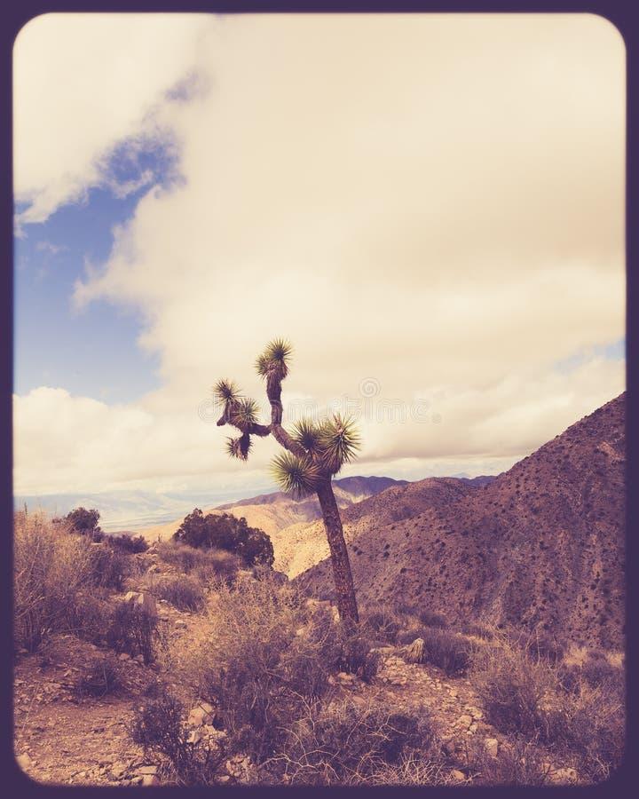 Uitstekende stijl Joshua Tree National Park stock afbeeldingen