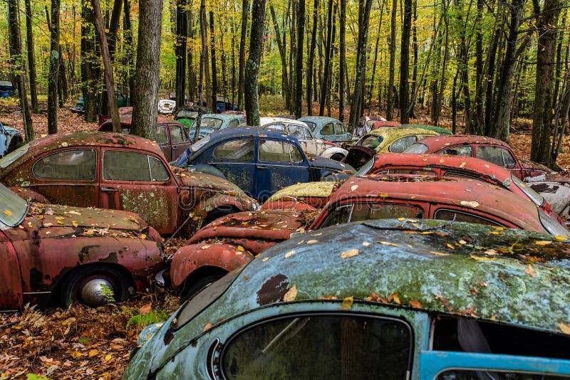 Uitstekende VW-Kever - Volkswagen-Type I - het Autokerkhof van Pennsylvania royalty-vrije stock fotografie