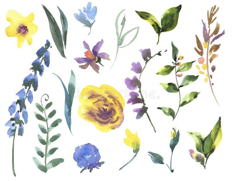 Uitstekende Waterverf Bloemenreeks van Wildflowers, Groene Bladeren stock illustratie