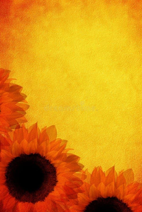 Uitstekende zonnebloemen royalty-vrije stock afbeelding