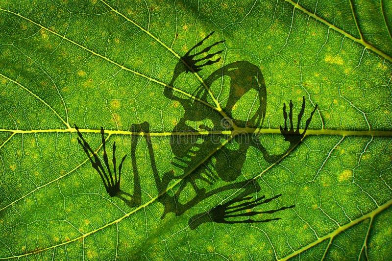 Uitsterven van soorten en symbool voor de opwarming van de aarde, kikkerskelet royalty-vrije stock afbeeldingen